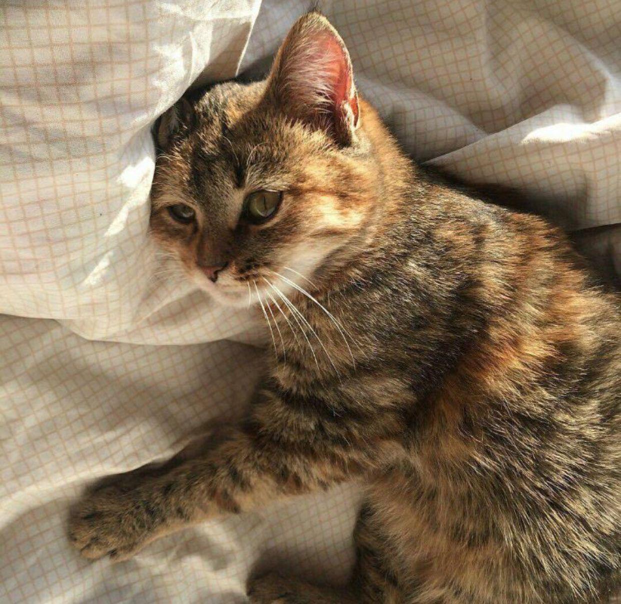 maggienork Cat aesthetic, Cats, Animals