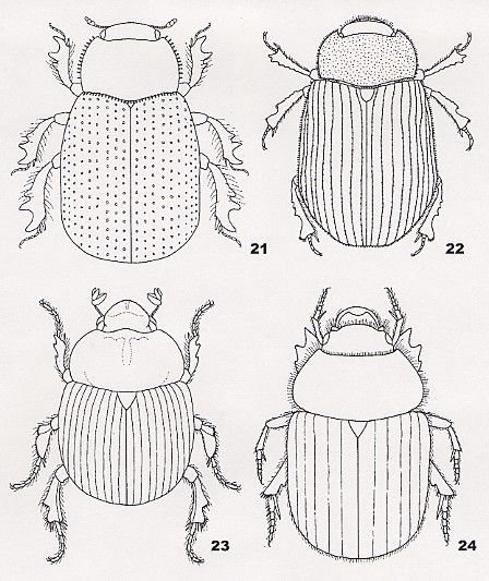 Coloring Pages For Kids Egypt Dung Beetle | Scarab Colouring Pages (page 2)