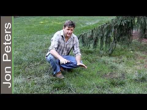 Here S A Video And Simple How To Instructions Showing You How To Make Grass Grow Fast And Fix Bald Spots In Your Lawn Do Grow Grass Fast Diy Lawn Lawn Repair