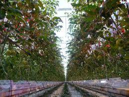 In het agrarisch buitengebied van Schandelo is de nodige glastuinbouw te vinden.