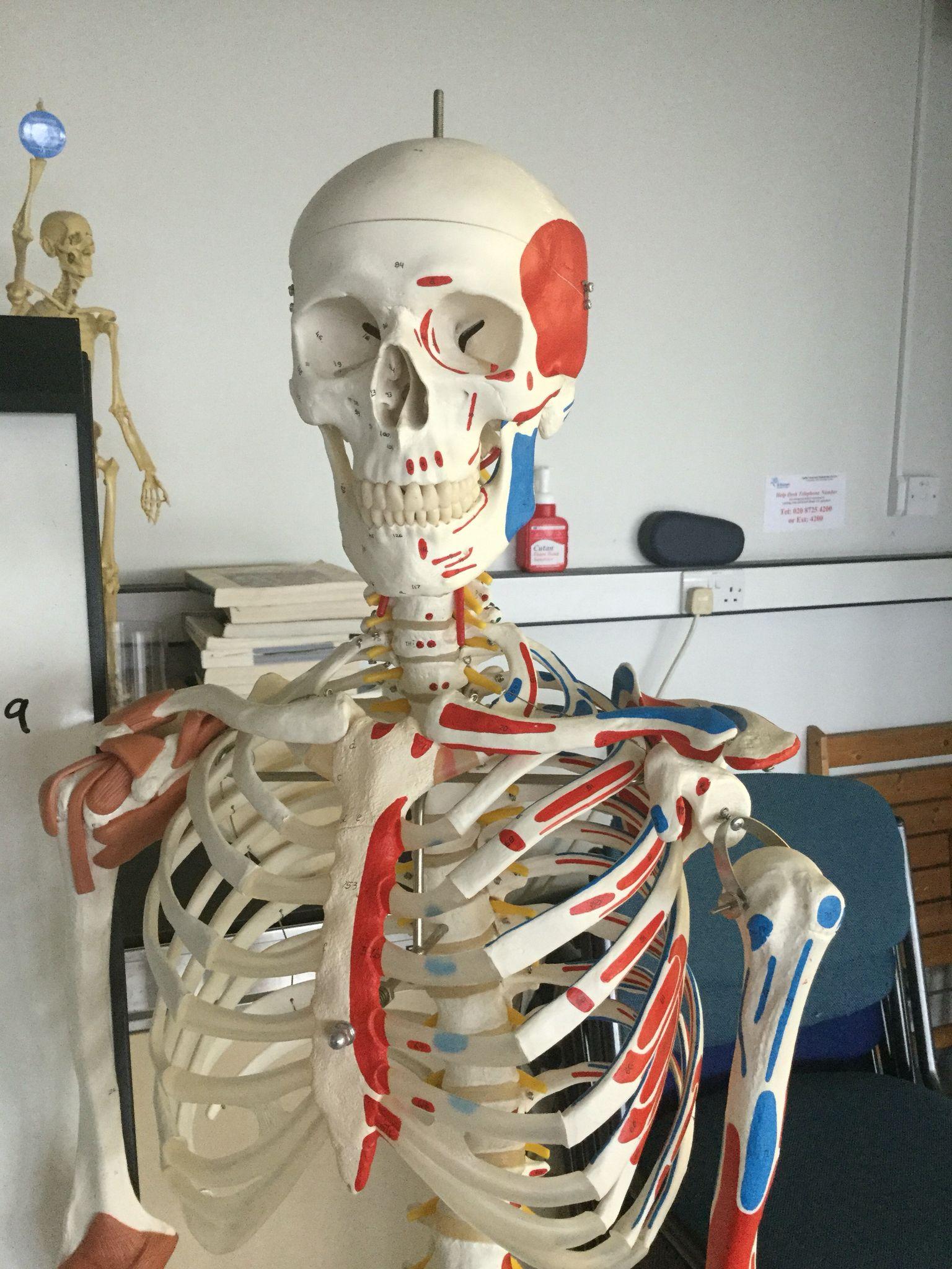 Bones:)