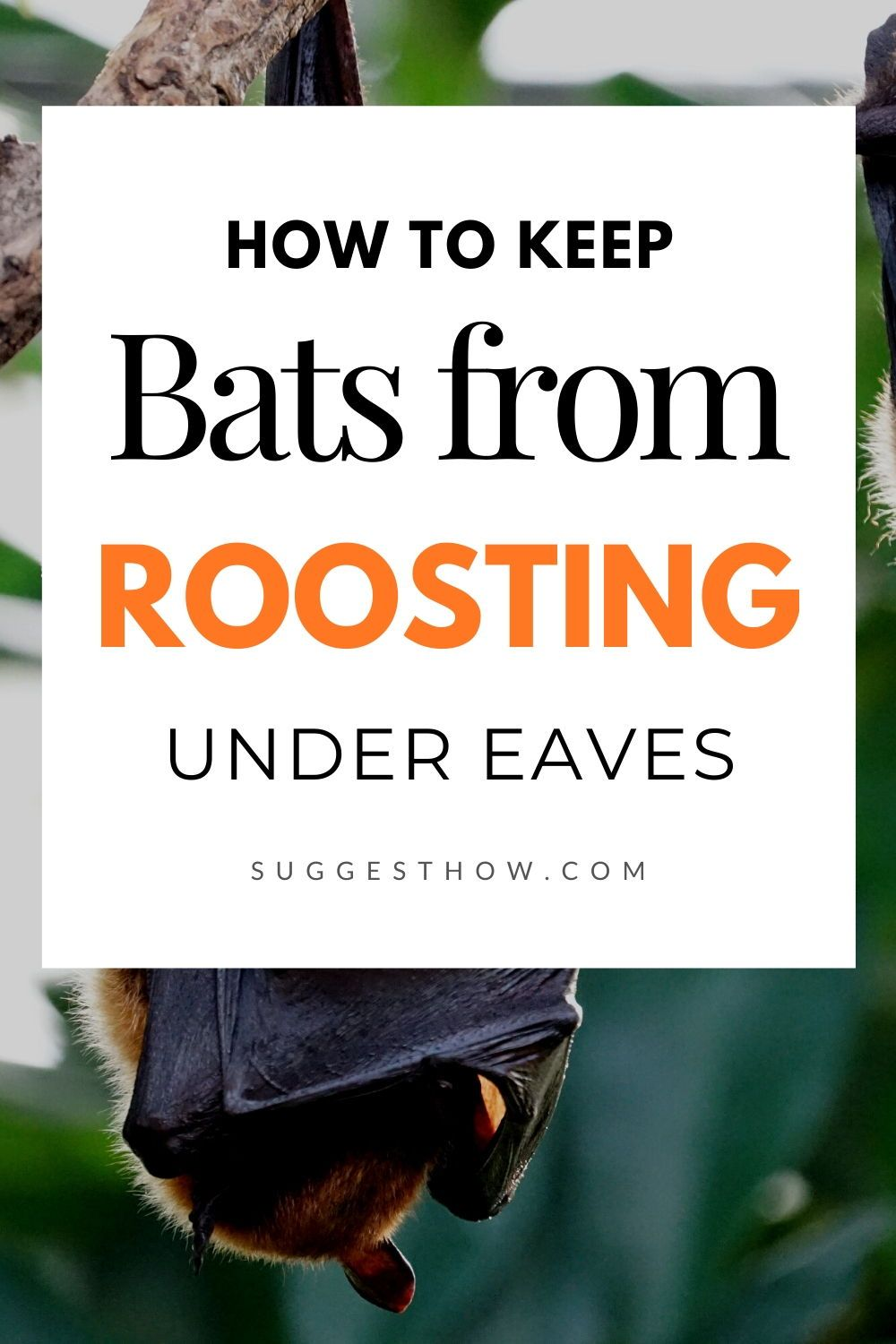 How to keep bats from roosting under eaves in 2020 bat