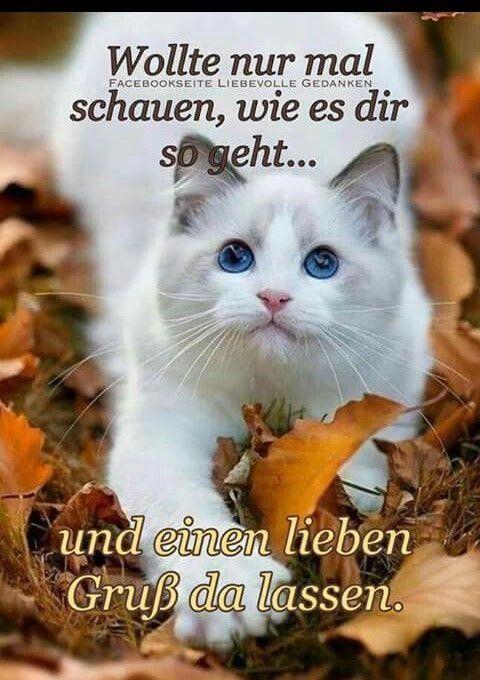 Liebe Grusse Katzen Bilder Mit Bildern Liebe Grusse Bilder