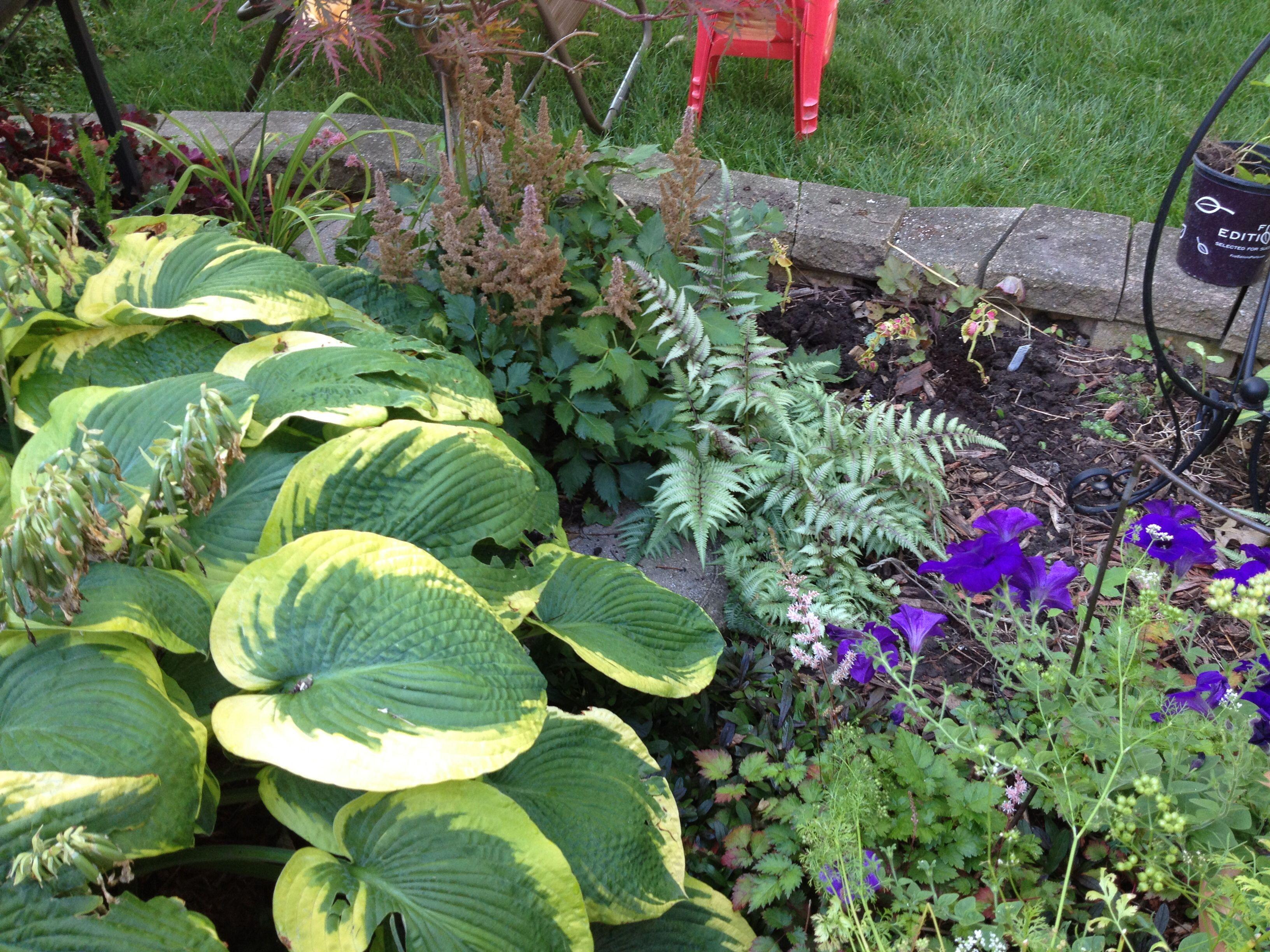 Jurassic Park Hosta Gardening With Hostas Jurassic Park Park