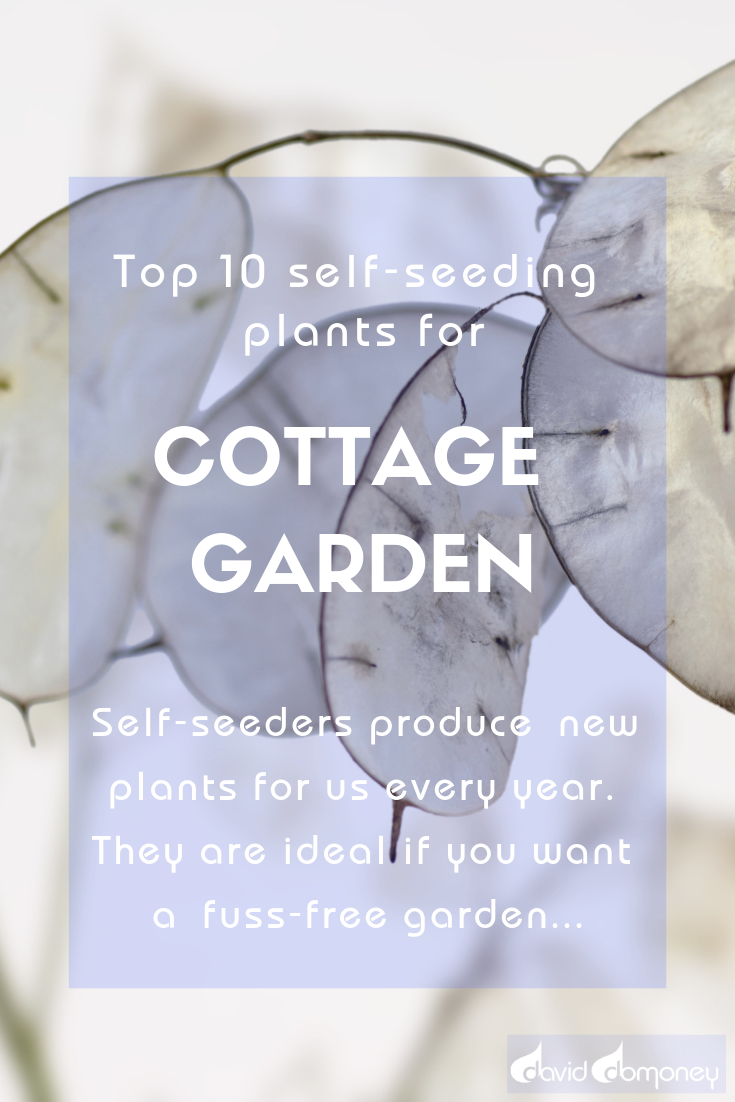 Top 10 Self Seeding Plants For A Fuss Free Cottage Garden