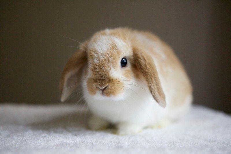 Newborn Litters Rabbits For Sale Baby Bunnies Cute Animals