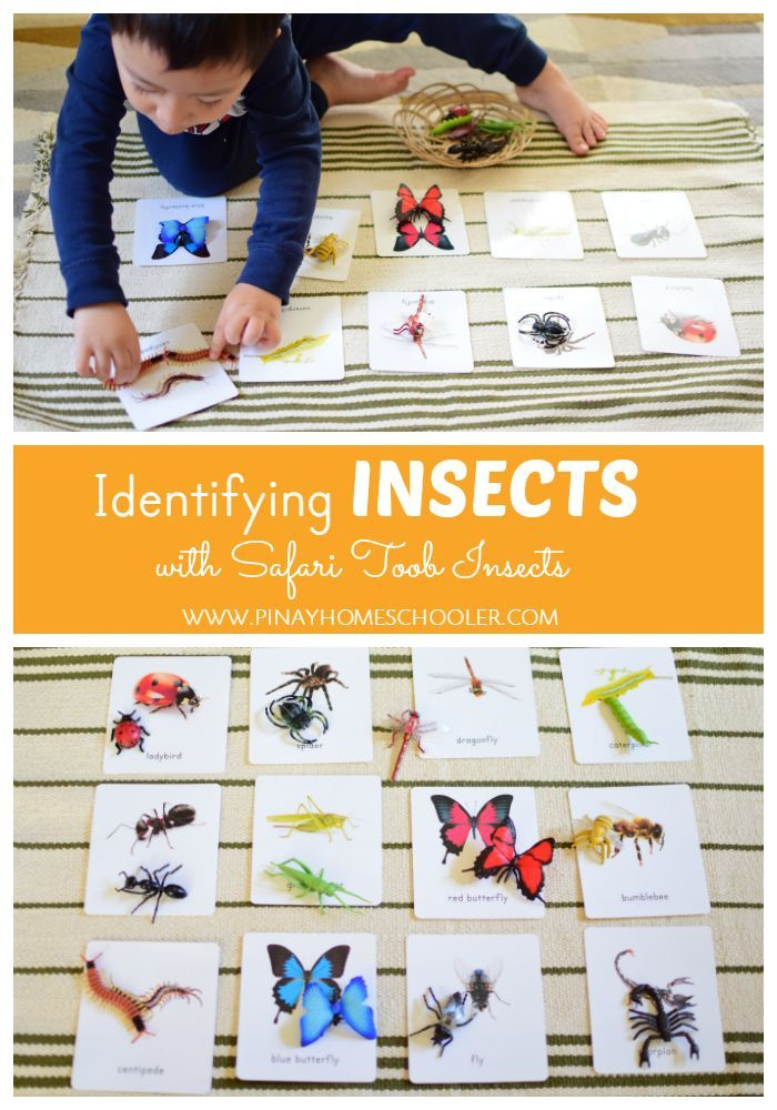 Montessori Inspired Insects Activity   Bug and Insect Crafts and