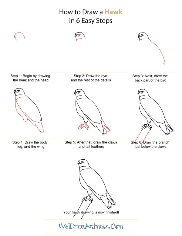 Http Www Wedrawanimals Com Wp Content Uploads 2012 12 How To Draw A Hawk Step By Step Png Bird Drawings Draw Drawings
