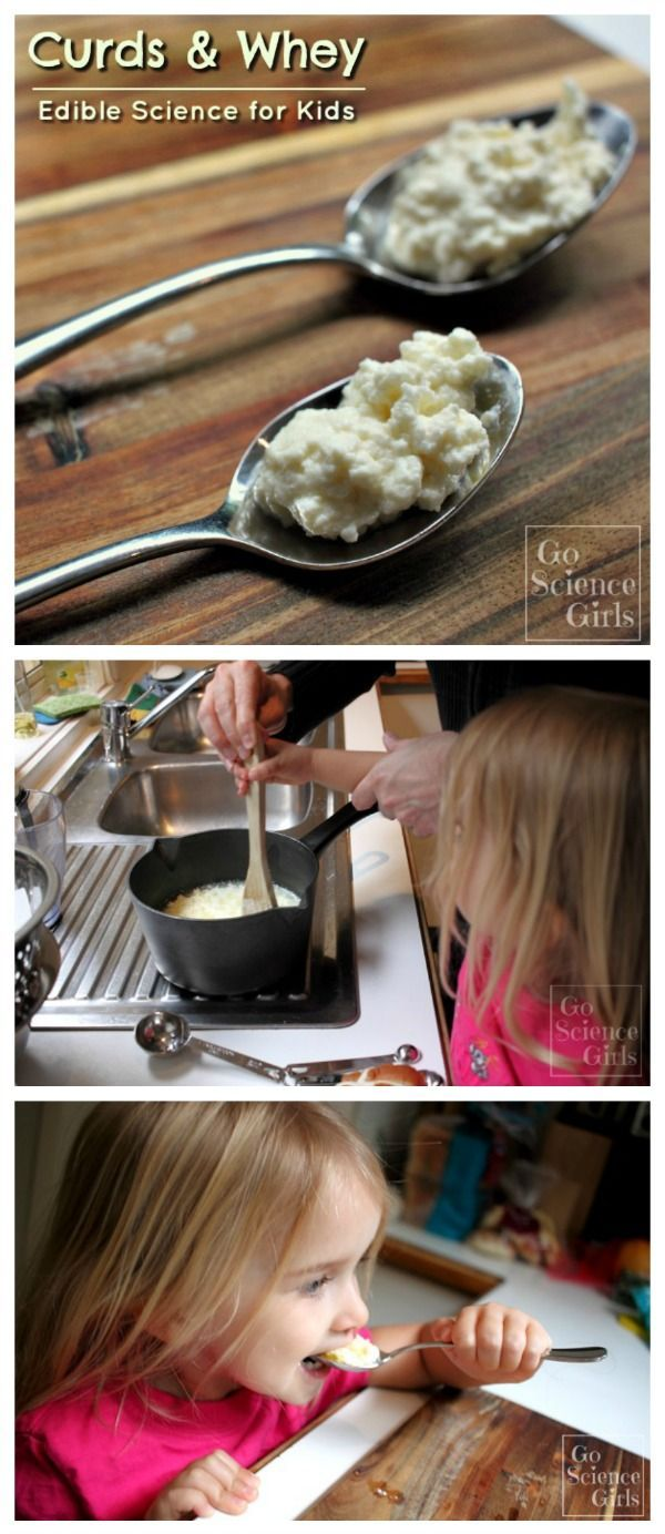 How to make curds and whey edible food food science and science how to make curds and whey science for kidsfood forumfinder Images