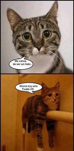 Awww Cosa Tan Hermosa 3 Gatos Humor Espanol Memes De Animales Divertidos Meme Gato Mascotas Memes