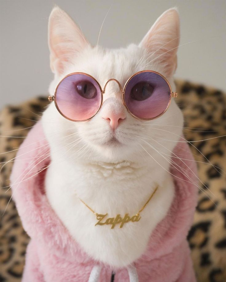 Zappa the Instagram Model Cat Is Inspired by Gigi Hadid and Has the Closet to Prove It