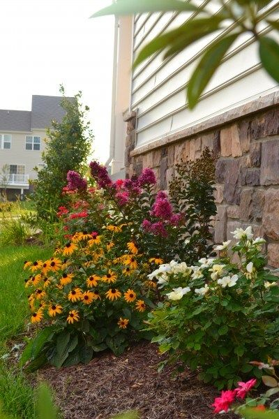 My summer garden side yards knockout roses and summer for Landscaping rocks myrtle beach