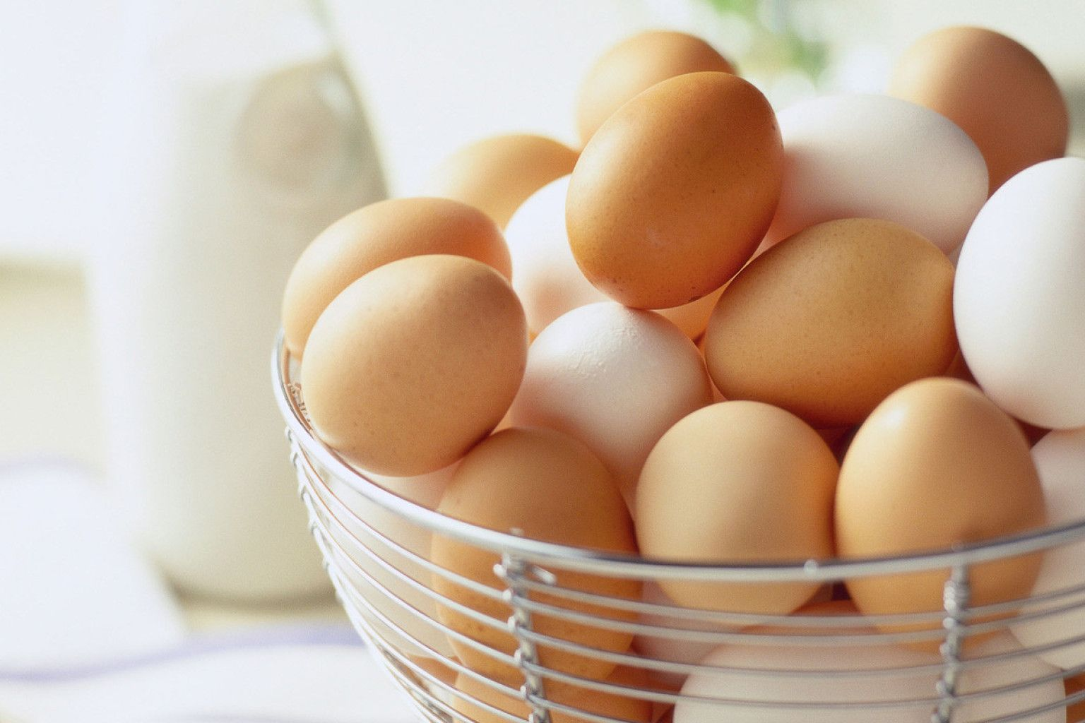Why eggs are scratching 70