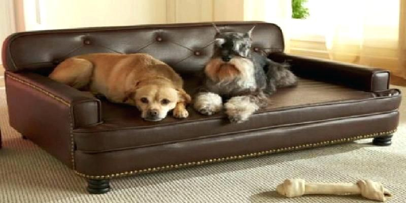 Best Sofa For Dogs Pet Sofa Bed Leather Dog Bed Cool Couches