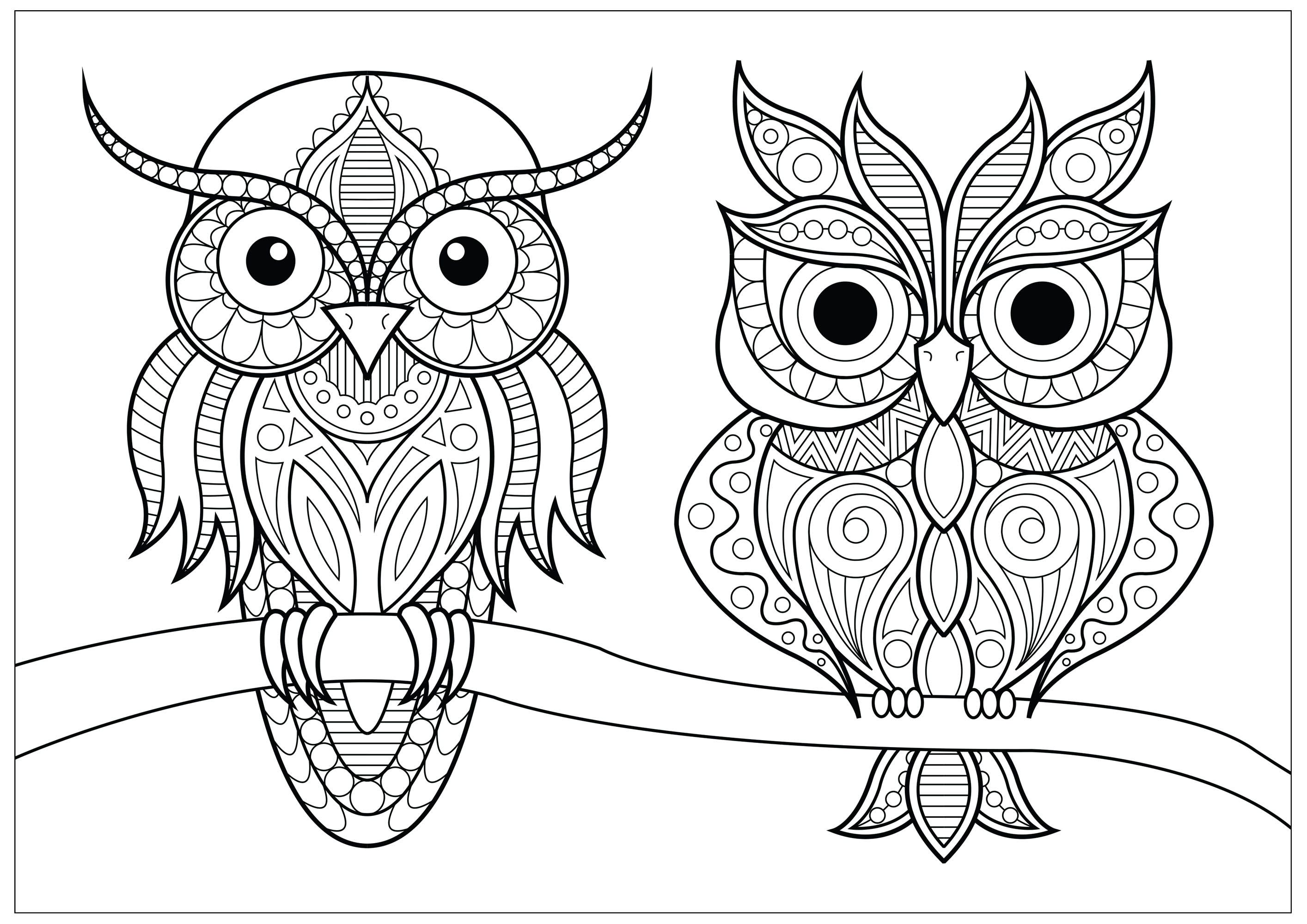 Two Owls With Simple Patterns On Branch Two Pretty And Calm Owls Resting On A Branch From Th In 2020 Owl Coloring Pages Animal Coloring Pages Unicorn Coloring Pages