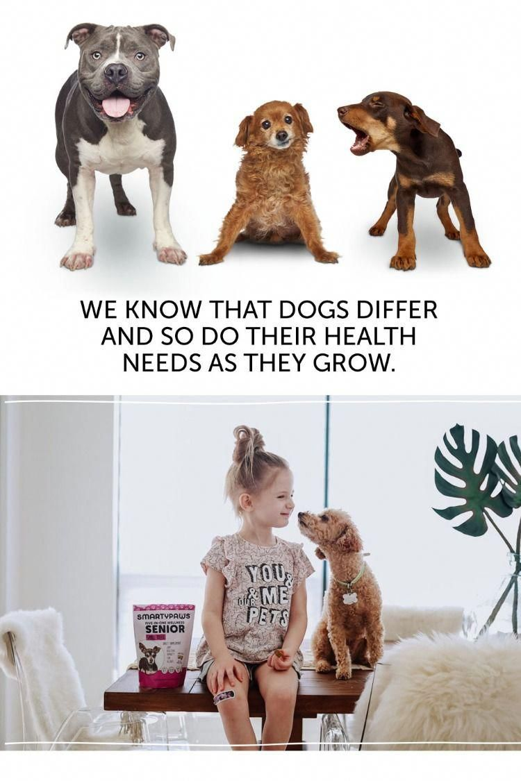Trustworthy Restructured Healthy Dog Food Over 500 Value Funny Animal Memes Cute Animals Dogs
