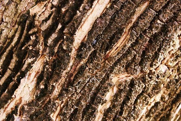 tree bark texture closeup nature background