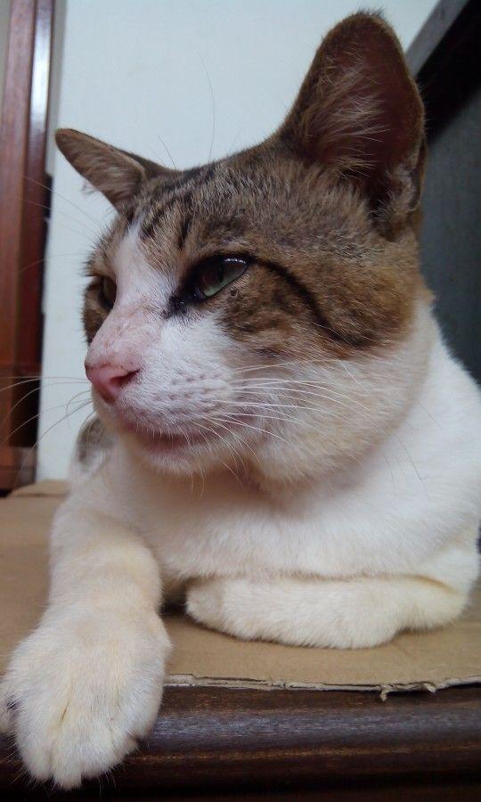 Cat at temple