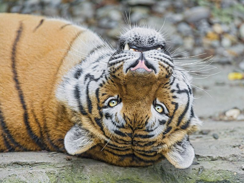 Lailek on the back by Tambako The Jaguar on Flickr.