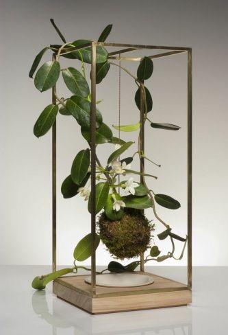 Le kokedama les plantes suspendues art japon for Plante kokedama