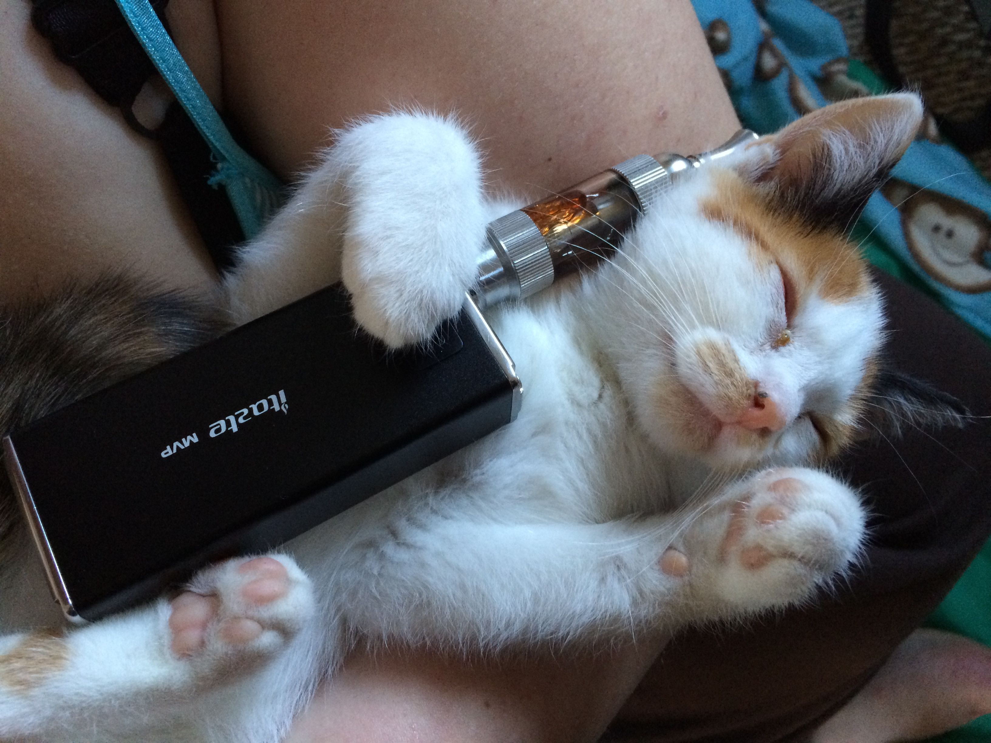 My Kitten Doesn T Seem To Mind Vaping Vape Humor Vape Vape Memes