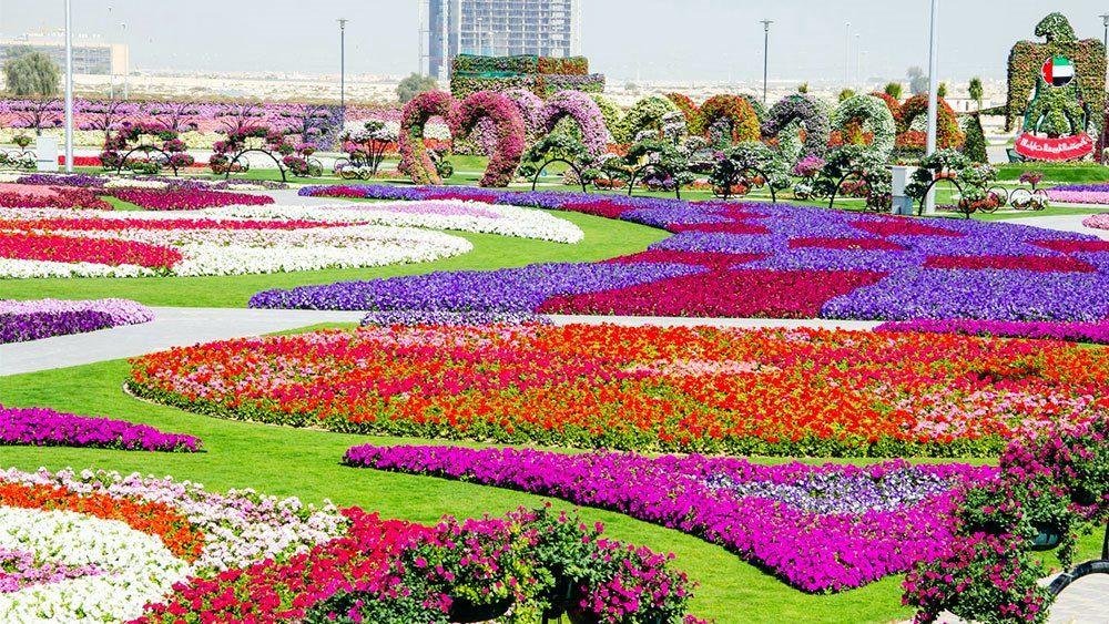 Dubai Miracle Garden Tourism Dubai Miracle Garden Beautiful Gardens Most Beautiful Gardens