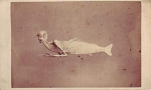 "ca. 1860, [carte de visite portrait of a ""Monkey Fish of Japan"", one of many of such specimens created during the 18th and 19th centuries. This particular ""merman"" was later purchased by P.T. Barnum and shown at the Chinese and Japanese Warehouse on Regent Street in London], Gush and Fergusson"