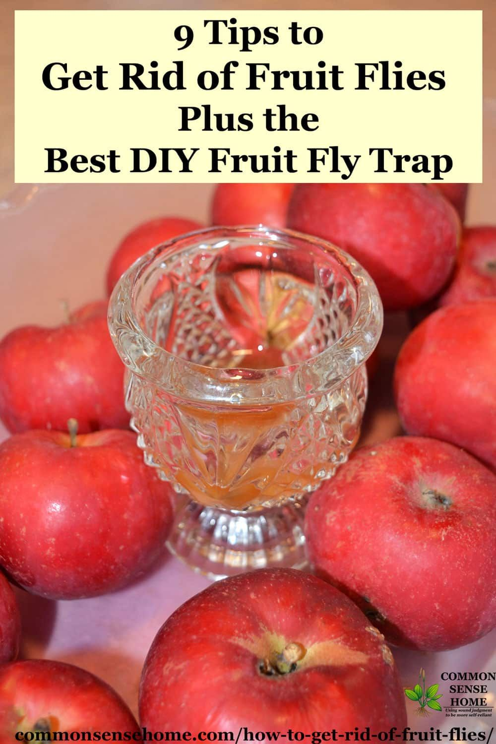 9 Tips To Get Rid Of Fruit Flies And The Best Fruit Fly Trap Fruit Fly Trap Fruit Flies Best Fruit Fly Trap