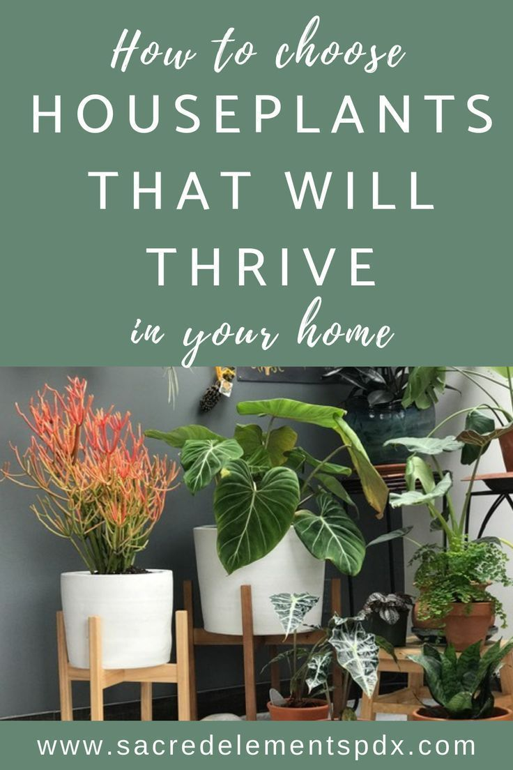 Ever wondered which houseplants will do well in your home
