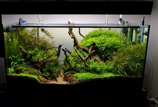 new junglescape by nicpapa blue aquarium aquascaping paludariums terrariums pinterest. Black Bedroom Furniture Sets. Home Design Ideas
