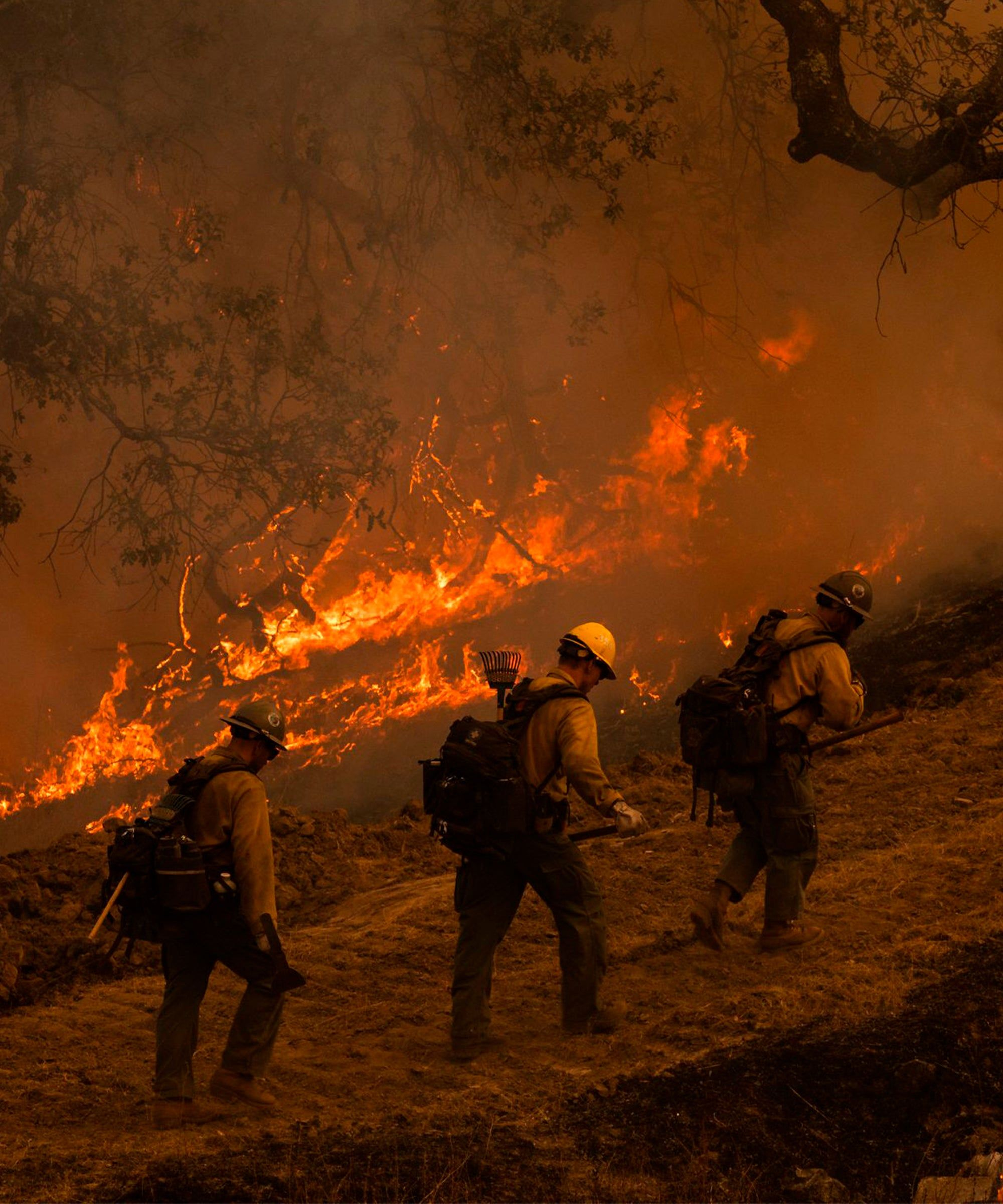How To Help The Victims Of The Latest Wildfires In California Wine Country California California California Wildfires