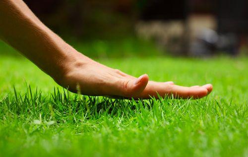 Radio Spring Lawn Preparation Lawn Care Lawn Care Tips Lawn