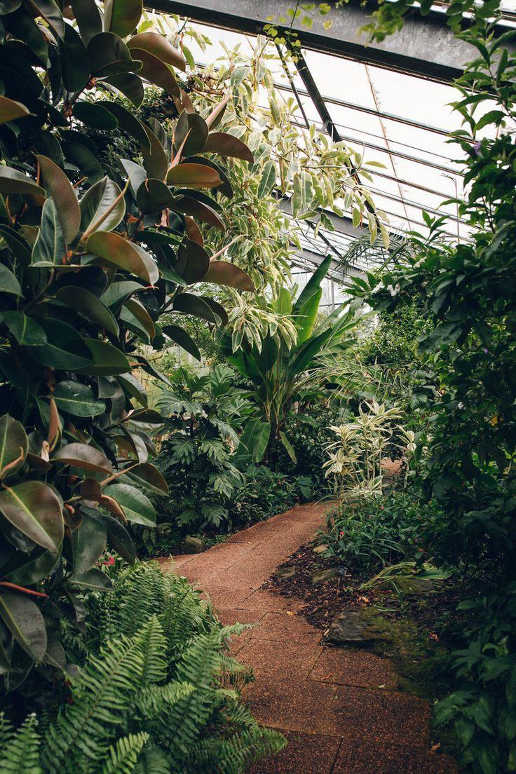 The Sill On Instagram Basillicana S Hoya Krimson Princess Is The Definition Of Aestheticallyplea In 2020 Botanical Gardens Plant Aesthetic Conservatory Garden