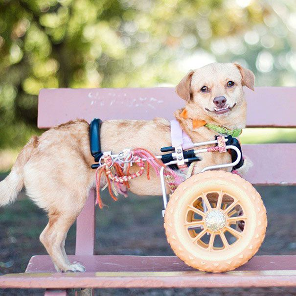 Adopted Disabled Dog Daisy Underbite Unite 10 Save A Dog Disabled Dog Dogs
