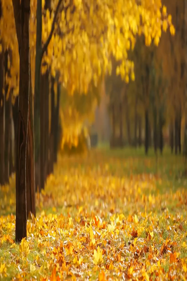 Fall In Love With Affiliate Marketing Nature Photography Autumn Season Nature Nature Gif