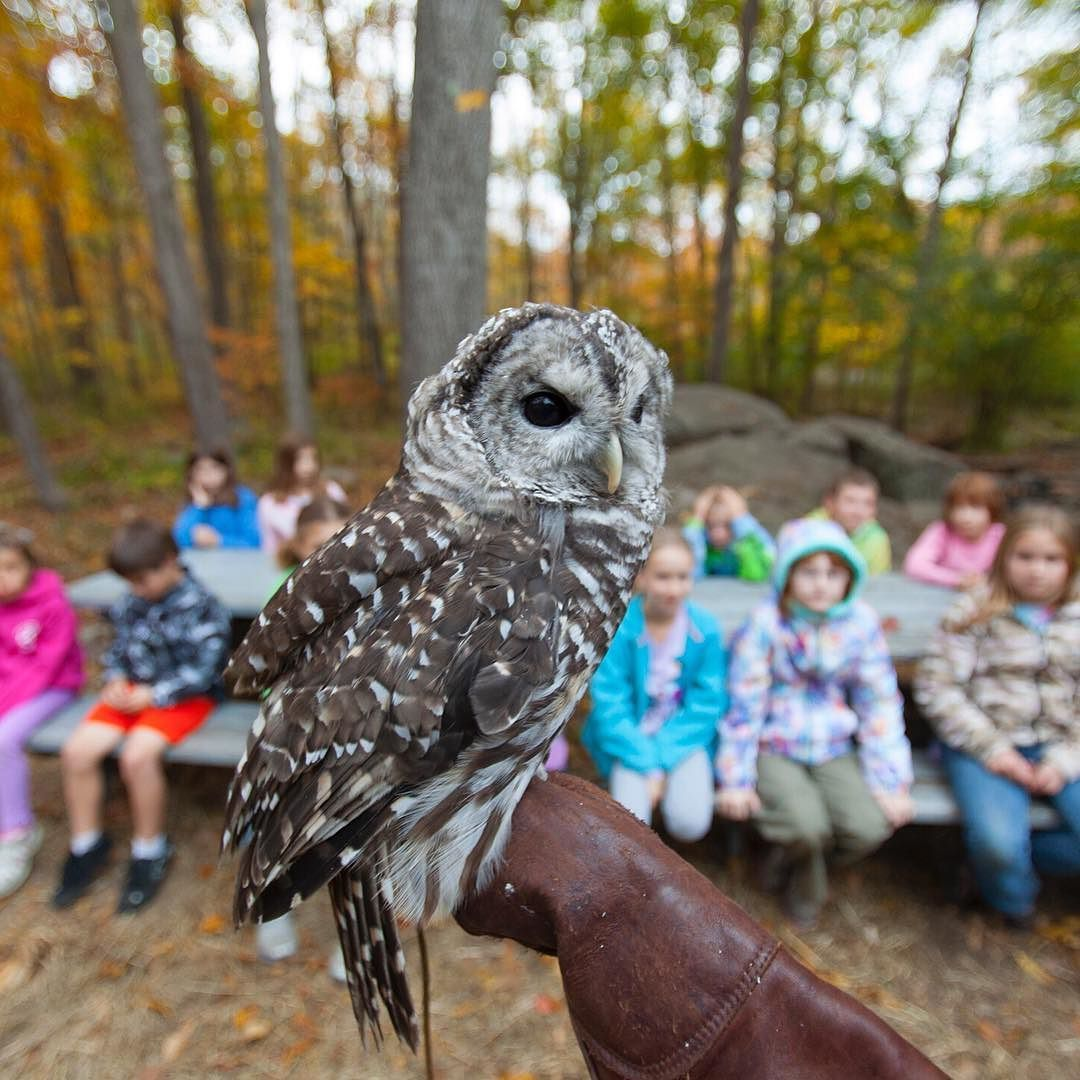 Whoo says Owlgebra isn't fun? These kids are getting to know the natural world @dpnaturectr. Though the Denison Pequotsepos Nature Center in #Mystic #Connecticut serves more than 50000 visitors a year it didn't have land to call its own until The Trust for Public Land helped protect Coogan Farm as its outdoor classroom. Now permanently protected it's the perfect setting for introducing both children and adults to the regions birds and wildlife varied habitats and more than 350 years of…