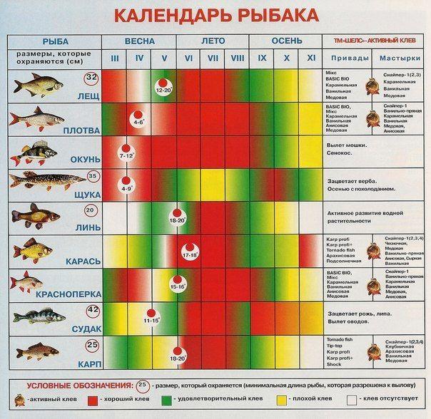 Календарь клева рыбы на 2020 саратов