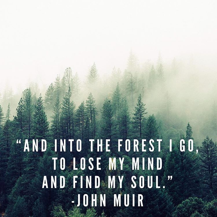 Into The Forest I Go To Lose My Mind Find My Soul Mindfulness