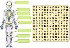 Resultado De Imagen De Cuidado De Los Musculos Para Niños Huesos Del Cuerpo Humano Huesos Del Cuerpo Cuerpo Humano
