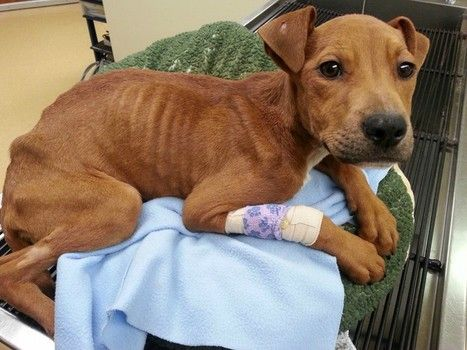 Emaciated dog left for dead in crate on Detroit street expected to survive