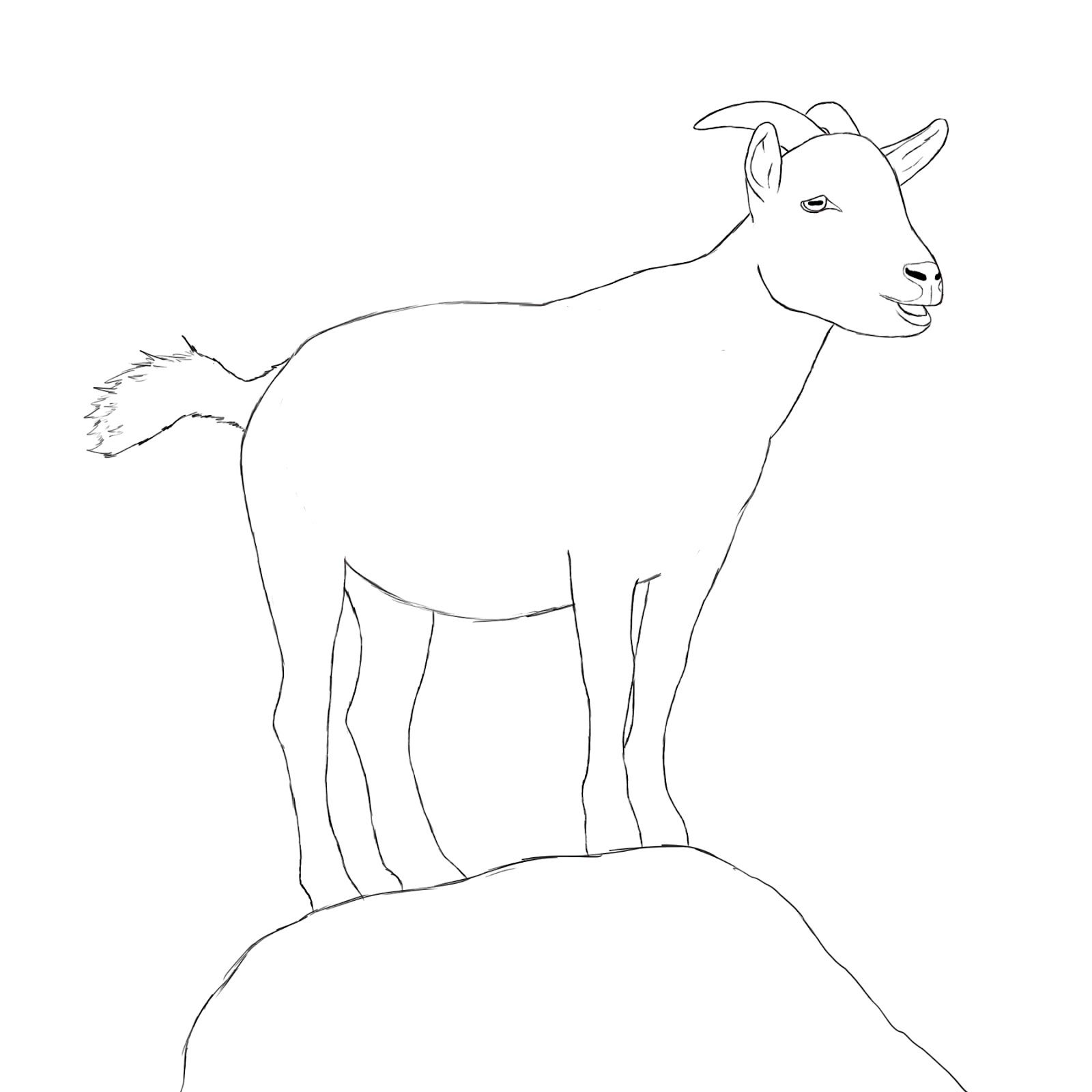 How To Draw A Goat | Draw Central | Drawings, Goat paintings