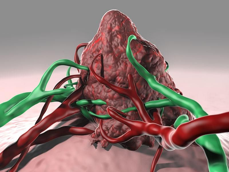Nature News & Comment on cancer research Cancer, Graft