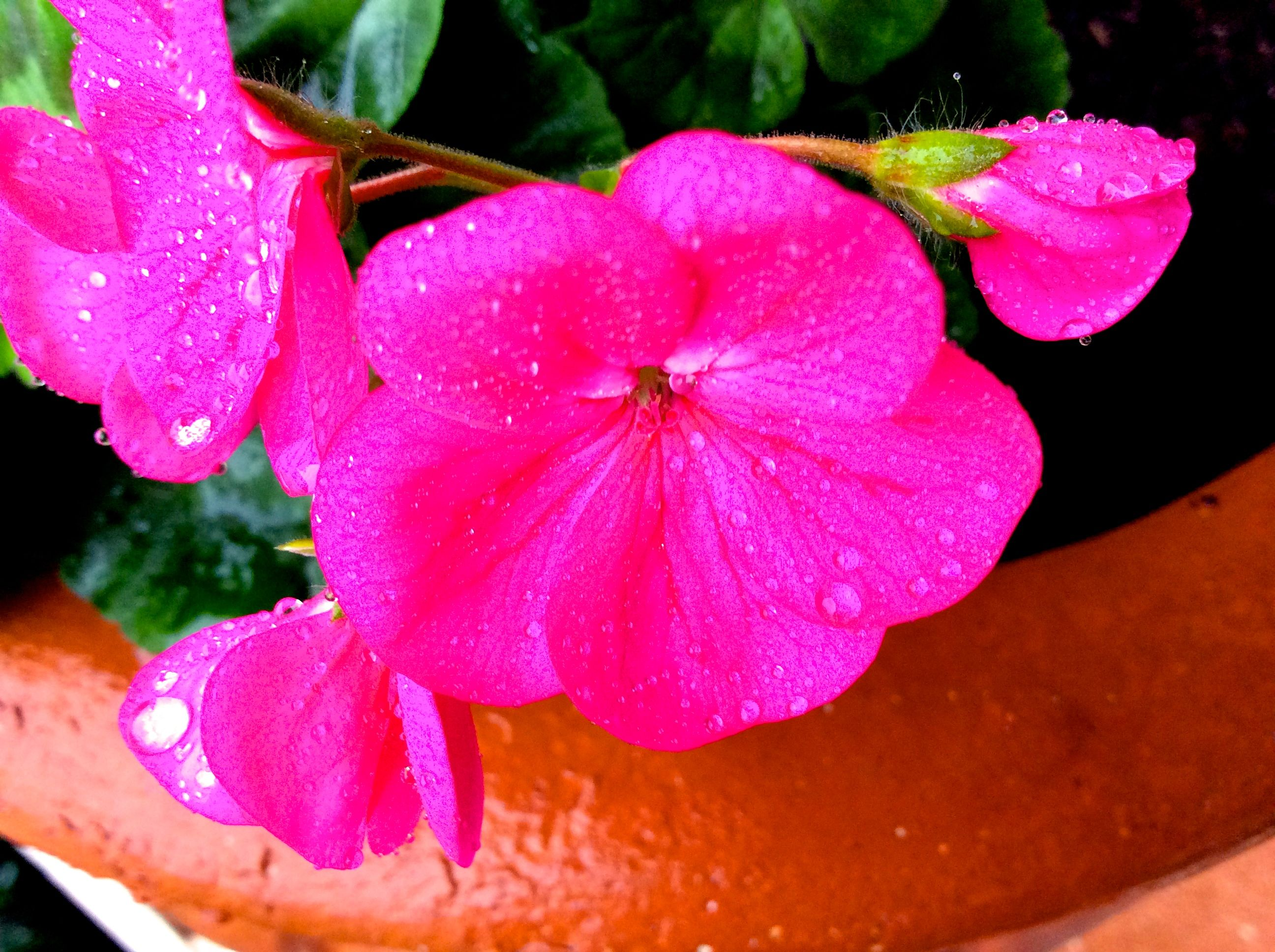 Pink Beautiful Flower Trinity Pinterest Beautiful Flowers