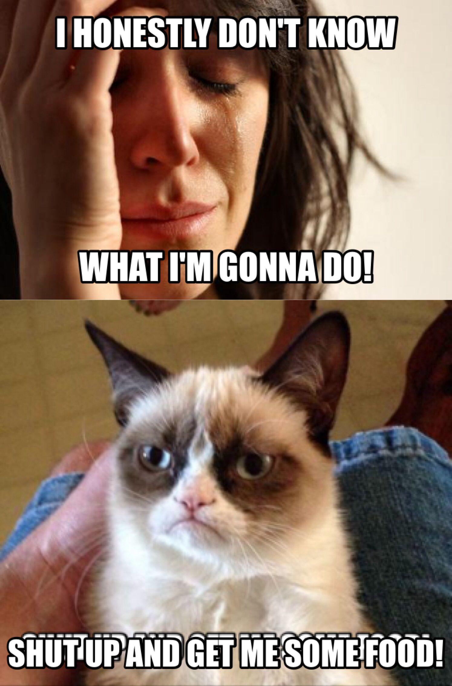 Grumpy cat   Grumpy cat quotes, Grumpy cat, Cuddly animals