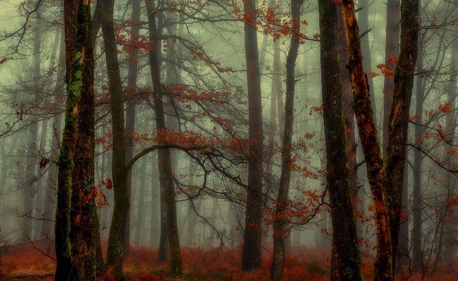 Autumn : the end! by Patrice Thomas - Photo 134255375 / 500px