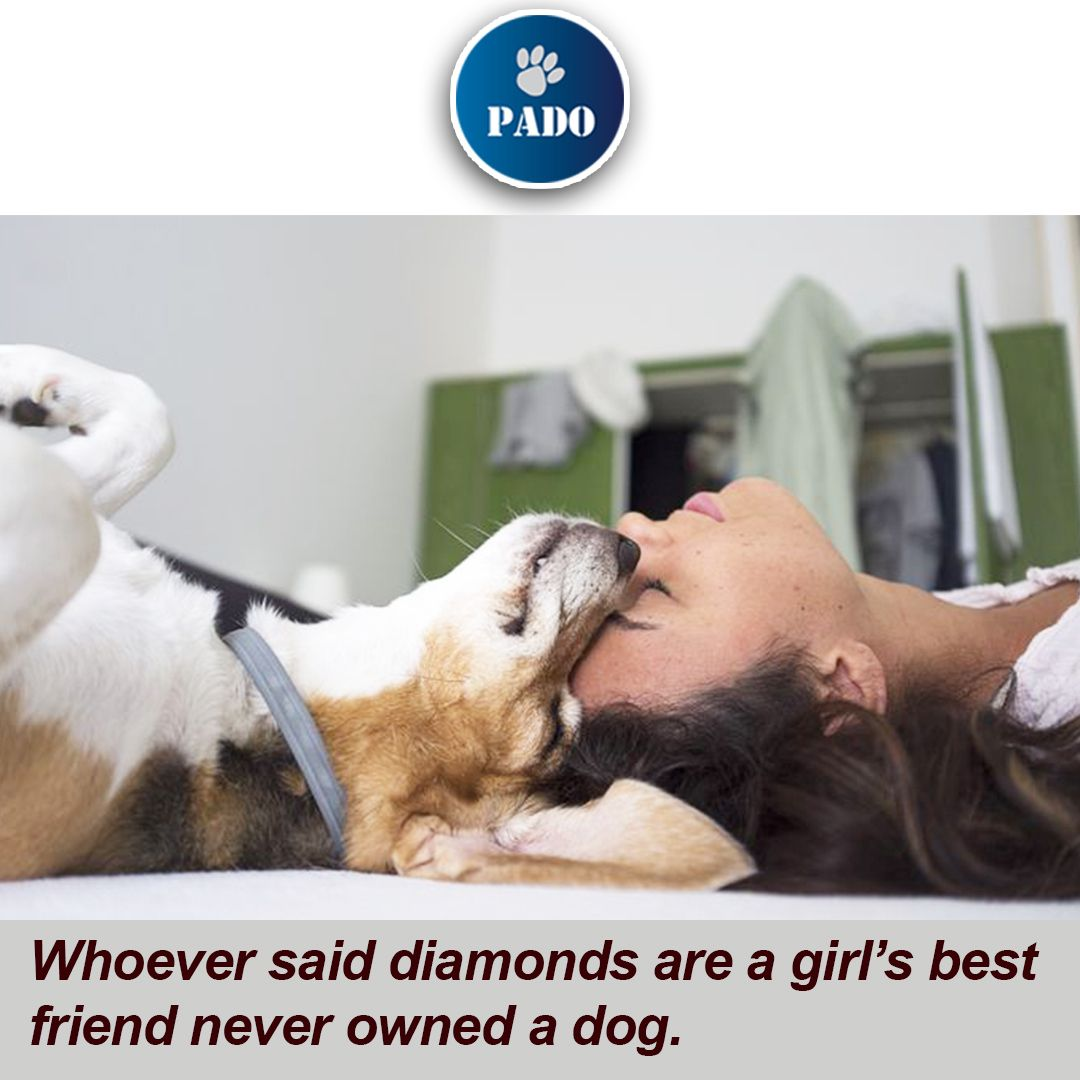 You May Have Many Best Friends But Your Dog Only Has One For More Follow On Instagram Padoofficial Follow On Facebook Padopets Dogs Pet Dogs Your Dog