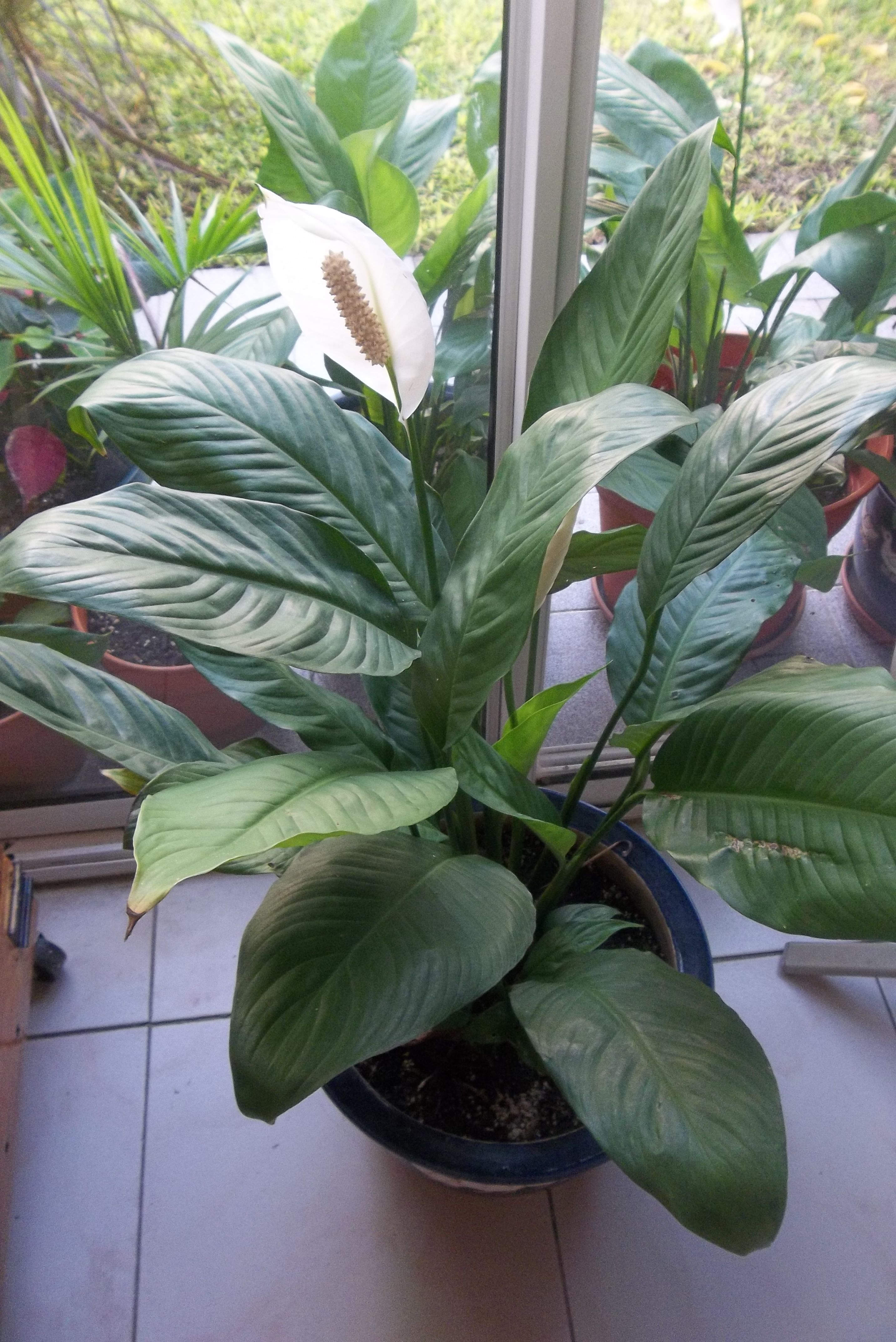 enamorada de esta planta