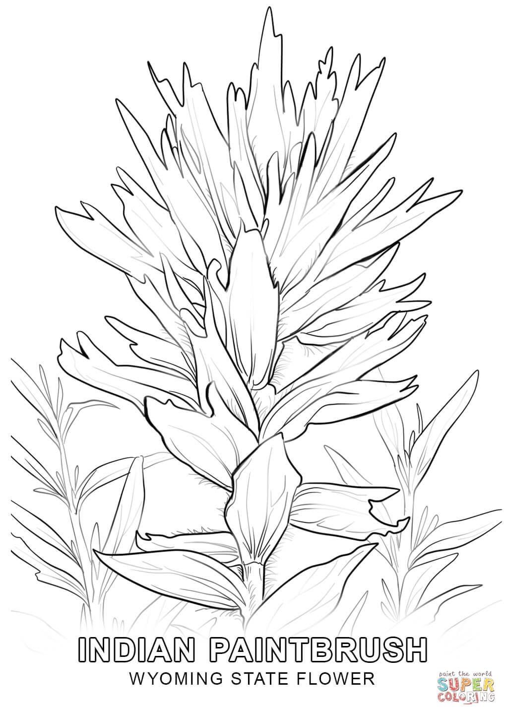 Wyoming State Flower Coloring Page Free Printable Coloring Pages