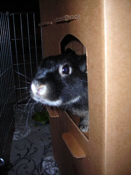 Start training now for the Ohio House Rabbit Rescue's signature Run Your Buns Off 5K and Little Hopper Fun Run, both taking place on Sept 27, 2014 (International Rabbit Day).