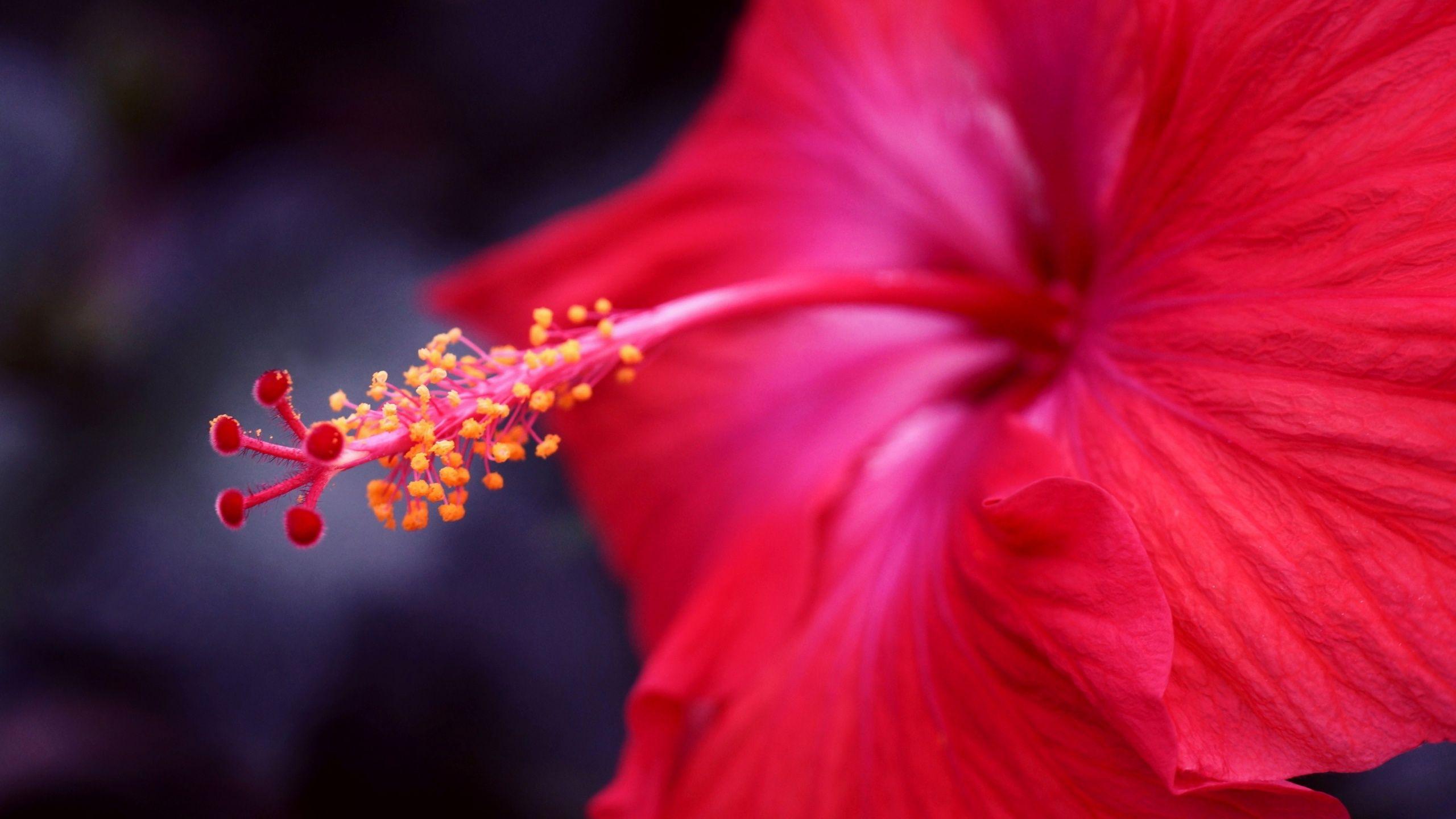 Ayurvedic benefits of hibiscus flower herbal medicine pinterest ayurvedic benefits of hibiscus flower izmirmasajfo